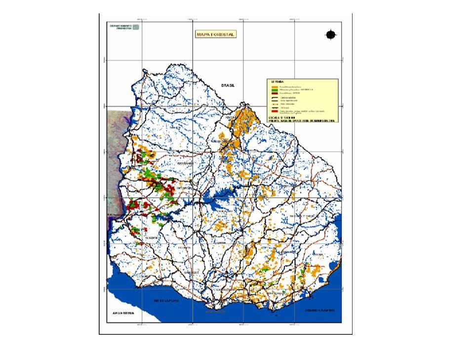 Definiciones para el Diseño Selección de suelos de prioridad forestal para: Aplicar el subsidio a la forestación solo en esos suelos, para lograr: a) Concentrar las áreas de plantación b) Creación de empresas de servicios c) Especialización de mano de obra