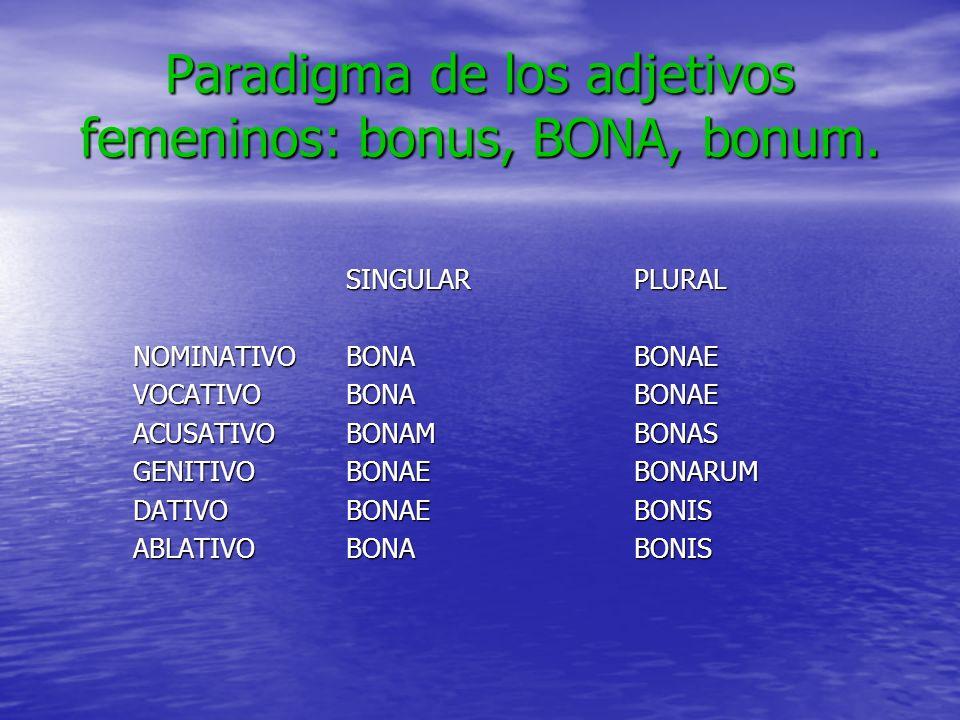 Paradigma de los adjetivos femeninos: bonus, BONA, bonum. SINGULARPLURAL NOMINATIVOBONABONAE VOCATIVOBONABONAE ACUSATIVOBONAMBONAS GENITIVOBONAEBONARU