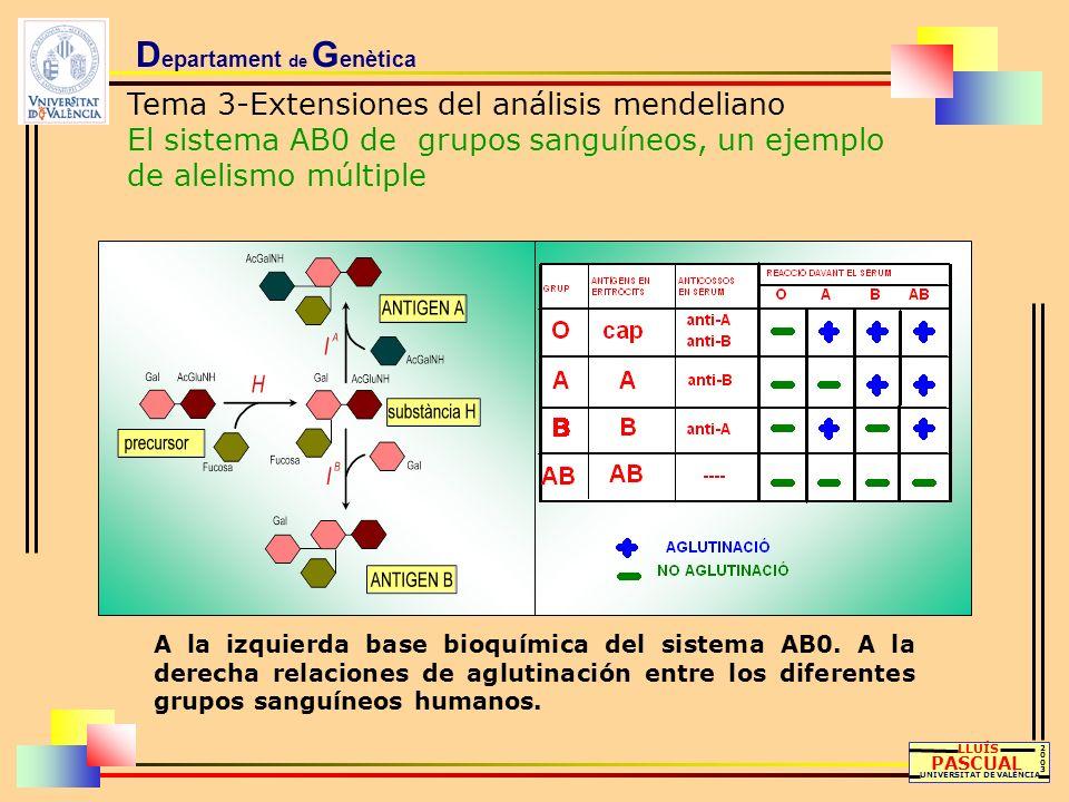 D epartament de G enètica Tema 3-Extensiones del análisis mendeliano El sistema AB0 de grupos sanguíneos, un ejemplo de alelismo múltiple LLUÍS PASCUA