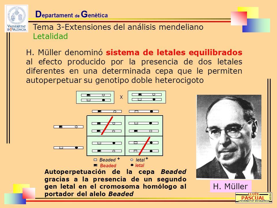 D epartament de G enètica Tema 3-Extensiones del análisis mendeliano Letalidad LLUÍS PASCUAL UNIVERSITAT DE VALÈNCIA 20032003 H. Müller denominó siste