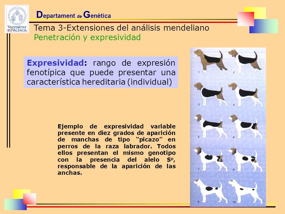 D epartament de G enètica Tema 3-Extensiones del análisis mendeliano Penetración y expresividad Ejemplo de expresividad variable presente en diez grad