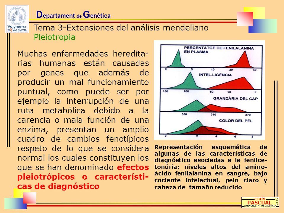 D epartament de G enètica Tema 3-Extensiones del análisis mendeliano Pleiotropia LLUÍS PASCUAL UNIVERSITAT DE VALÈNCIA 20032003 Muchas enfermedades he
