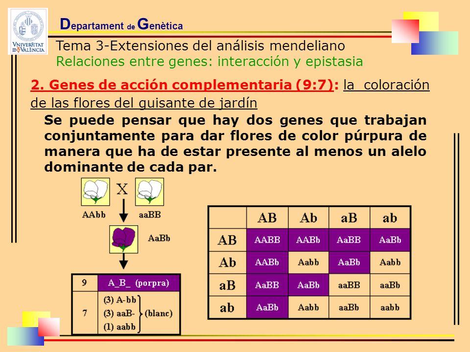 D epartament de G enètica Tema 3-Extensiones del análisis mendeliano Relaciones entre genes: interacción y epistasia 2. Genes de acción complementaria