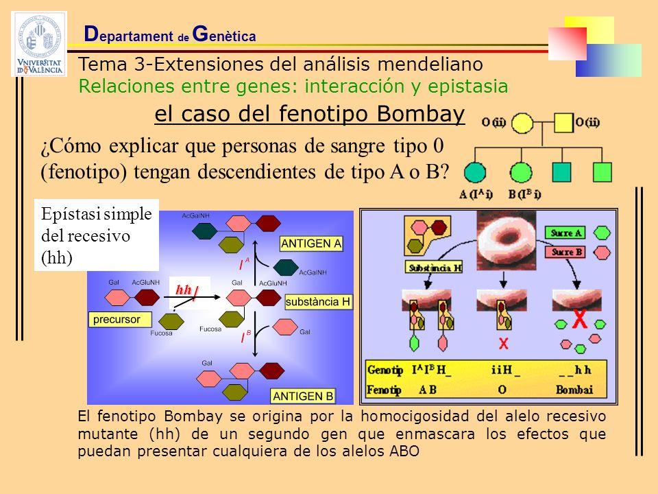 D epartament de G enètica Tema 3-Extensiones del análisis mendeliano Relaciones entre genes: interacción y epistasia el caso del fenotipo Bombay ¿Cómo