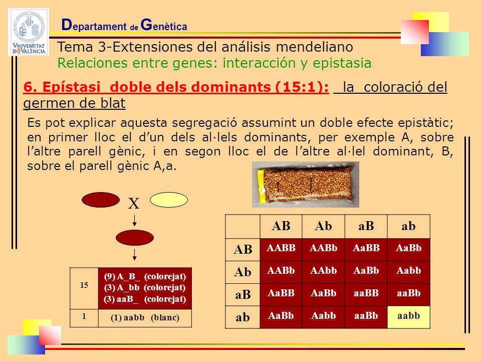 D epartament de G enètica Tema 3-Extensiones del análisis mendeliano Relaciones entre genes: interacción y epistasia 6. Epístasi doble dels dominants