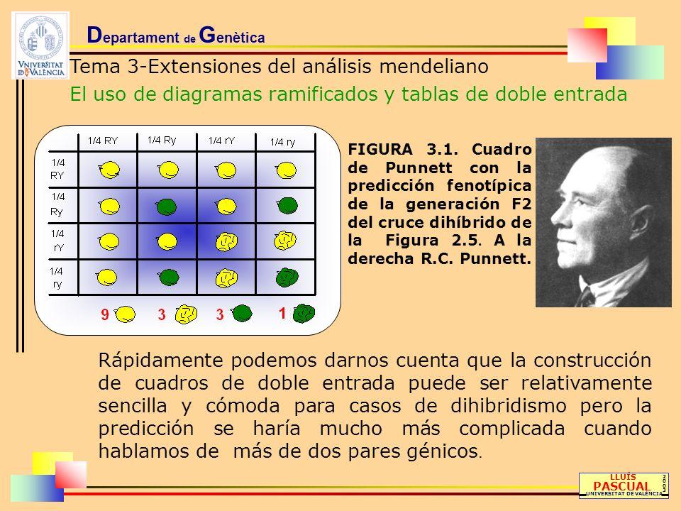 D epartament de G enètica Tema 3-Extensiones del análisis mendeliano El uso de diagramas ramificados y tablas de doble entrada LLUÍS PASCUAL UNIVERSIT
