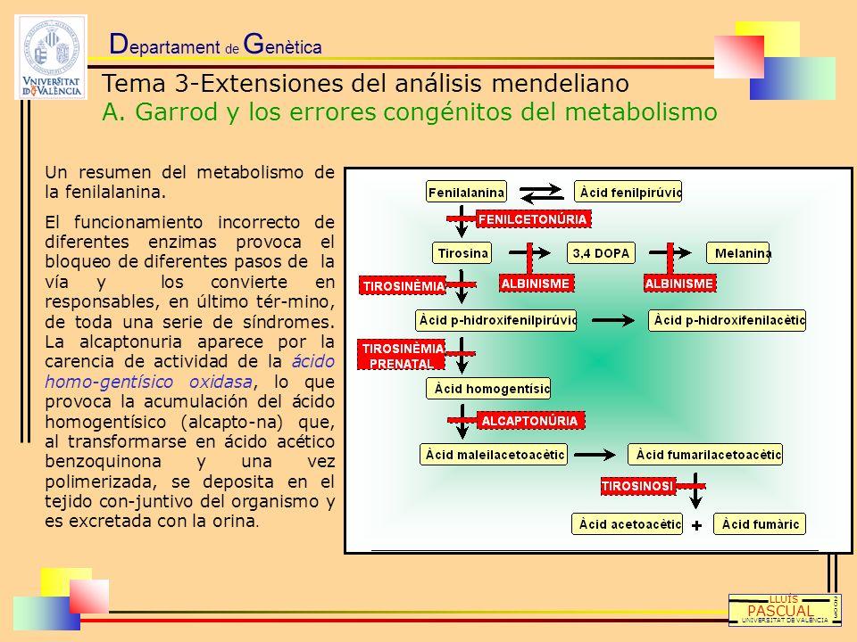D epartament de G enètica LLUÍS PASCUAL UNIVERSITAT DE VALÈNCIA 20032003 Un resumen del metabolismo de la fenilalanina. El funcionamiento incorrecto d