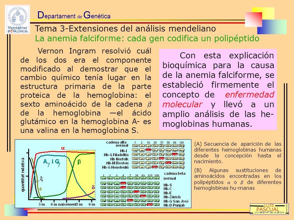 D epartament de G enètica LLUÍS PASCUAL UNIVERSITAT DE VALÈNCIA 20032003 Vernon Ingram resolvió cuál de los dos era el componente modificado al demost