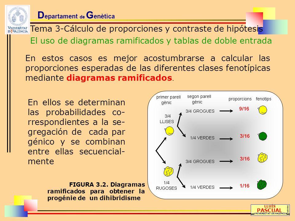 D epartament de G enètica Tema 3-Cálculo de proporciones y contraste de hipótesis El uso de diagramas ramificados y tablas de doble entrada LLUÍS PASC