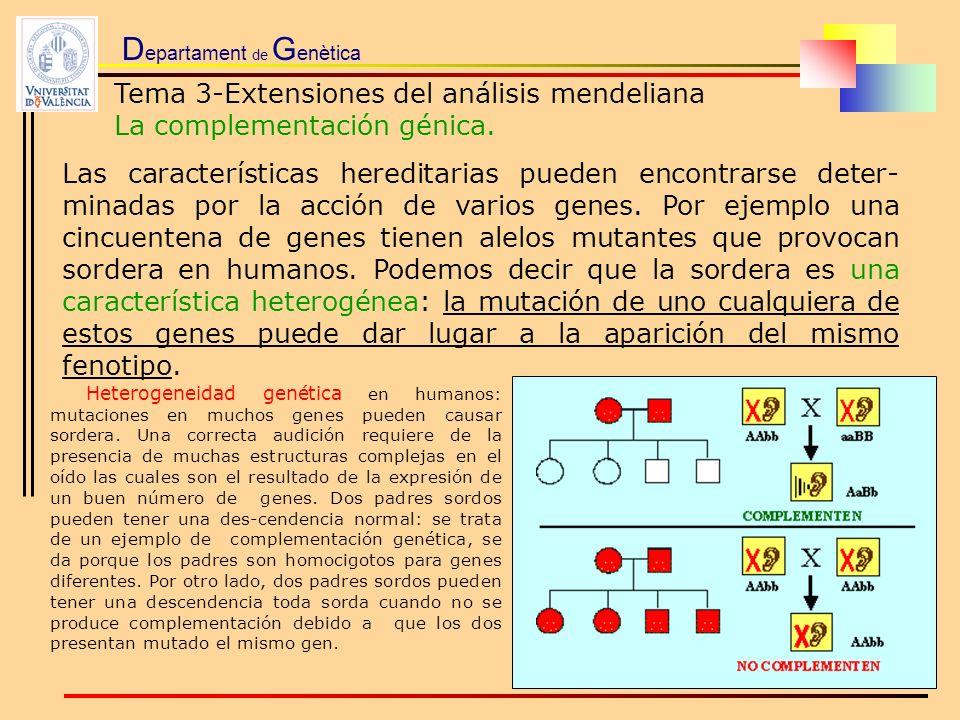 D epartament de G enètica Tema 3-Extensiones del análisis mendeliana La complementación génica. Las características hereditarias pueden encontrarse de