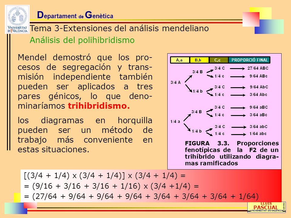 D epartament de G enètica Tema 3-Extensiones del análisis mendeliano Análisis del polihibridismo LLUÍS PASCUAL UNIVERSITAT DE VALÈNCIA 20032003 Mendel