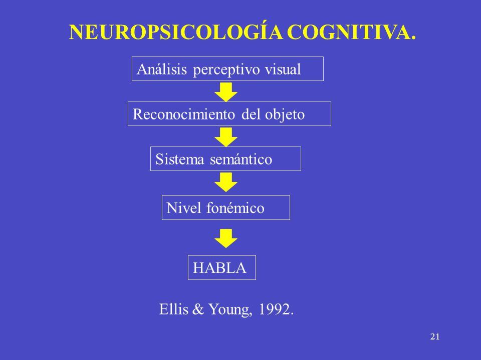 21 NEUROPSICOLOGÍA COGNITIVA. Análisis perceptivo visual Reconocimiento del objeto Sistema semántico Nivel fonémico HABLA Ellis & Young, 1992.