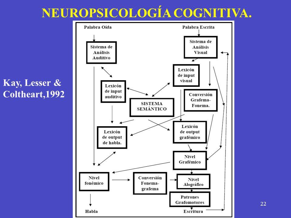 22 NEUROPSICOLOGÍA COGNITIVA. Kay, Lesser & Coltheart,1992