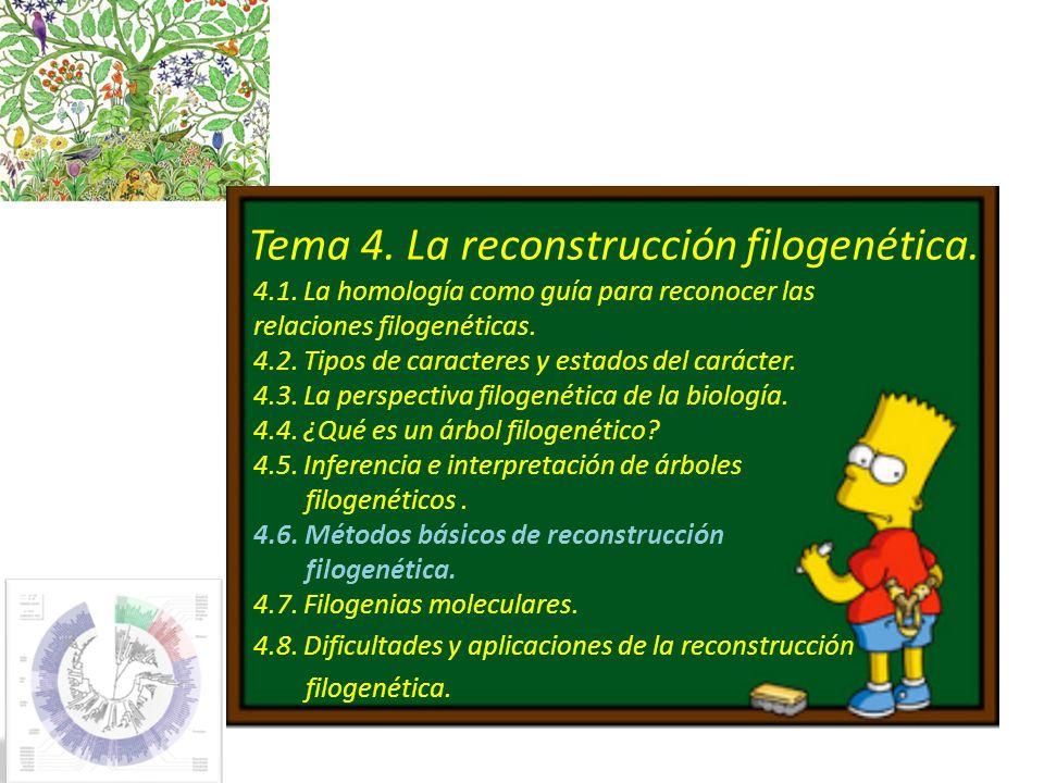 Tema 4. La reconstrucción filogenética. 4.1. La homología como guía para reconocer las relaciones filogenéticas. 4.2. Tipos de caracteres y estados de