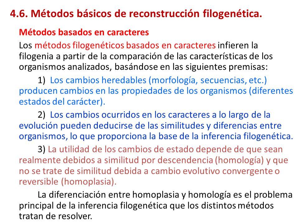 Métodos basados en caracteres Los métodos filogenéticos basados en caracteres infieren la filogenia a partir de la comparación de las características
