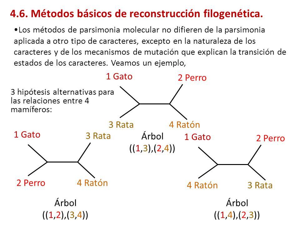3 hipótesis alternativas para las relaciones entre 4 mamíferos: 1 Gato 2 Perro 4 Ratón3 Rata 1 Gato 3 Rata 2 Perro4 Ratón 1 Gato 2 Perro 3 Rata4 Ratón