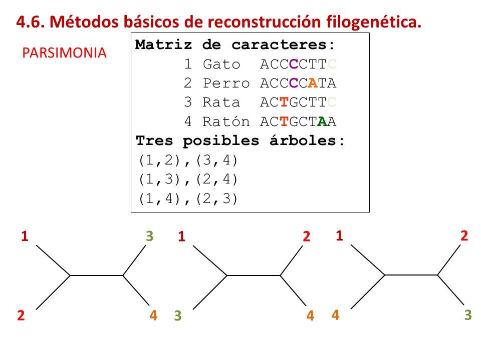 Matriz de caracteres: 1 Gato ACCCCTTC 2 Perro ACCCCATA 3 Rata ACTGCTTC 4 Ratón ACTGCTAA Tres posibles árboles: (1,2),(3,4) (1,3),(2,4) (1,4),(2,3) PAR