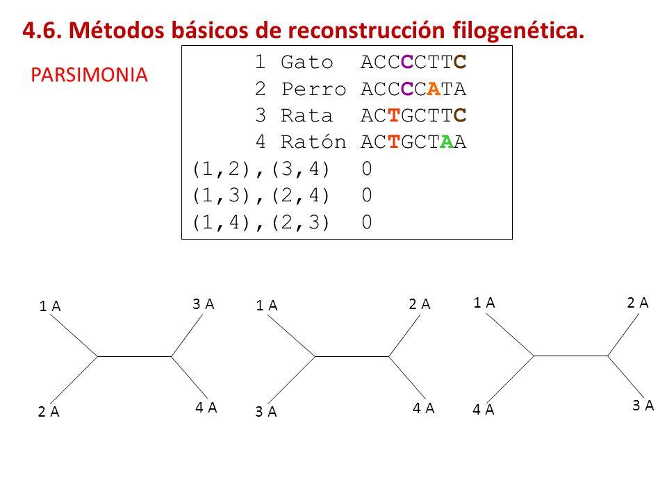 1 Gato ACCCCTTC 2 Perro ACCCCATA 3 Rata ACTGCTTC 4 Ratón ACTGCTAA (1,2),(3,4) 0 (1,3),(2,4) 0 (1,4),(2,3) 0 1 A 2 A 3 A 4 A 1 A 3 A 2 A 4 A 1 A 4 A 2
