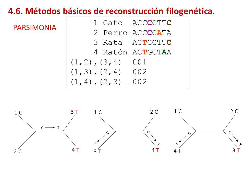 1 Gato ACCCCTTC 2 Perro ACCCCATA 3 Rata ACTGCTTC 4 Ratón ACTGCTAA (1,2),(3,4) 001 (1,3),(2,4) 002 (1,4),(2,3) 002 CT CT T C CT T C 1 C 2 C 3 T 4 T 1 C
