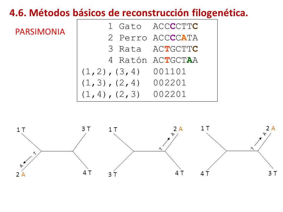 1 Gato ACCCCTTC 2 Perro ACCCCATA 3 Rata ACTGCTTC 4 Ratón ACTGCTAA (1,2),(3,4) 001101 (1,3),(2,4) 002201 (1,4),(2,3) 002201 1 T 2 A 3 T 4 T 1 T 3 T 2 A