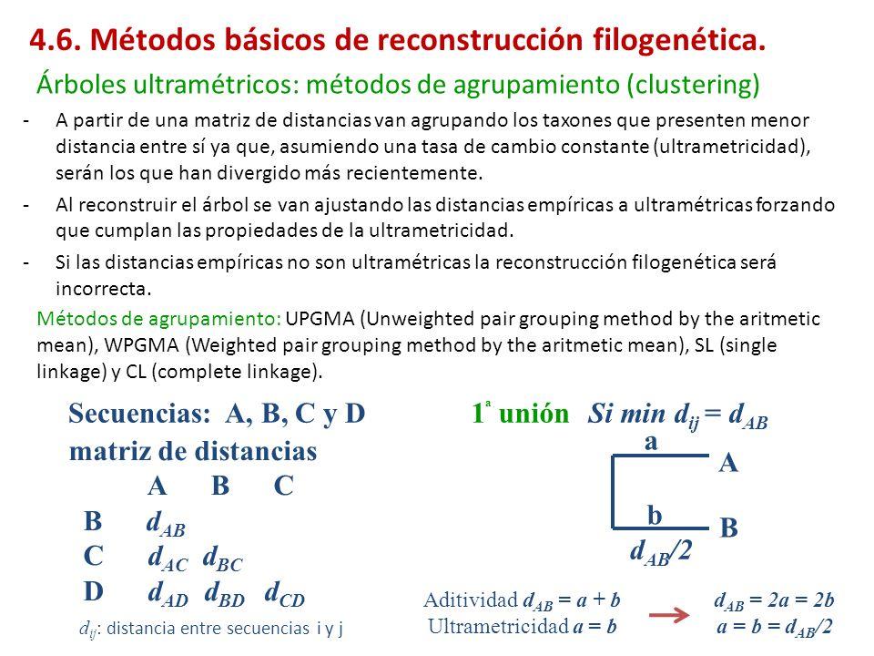 -A partir de una matriz de distancias van agrupando los taxones que presenten menor distancia entre sí ya que, asumiendo una tasa de cambio constante