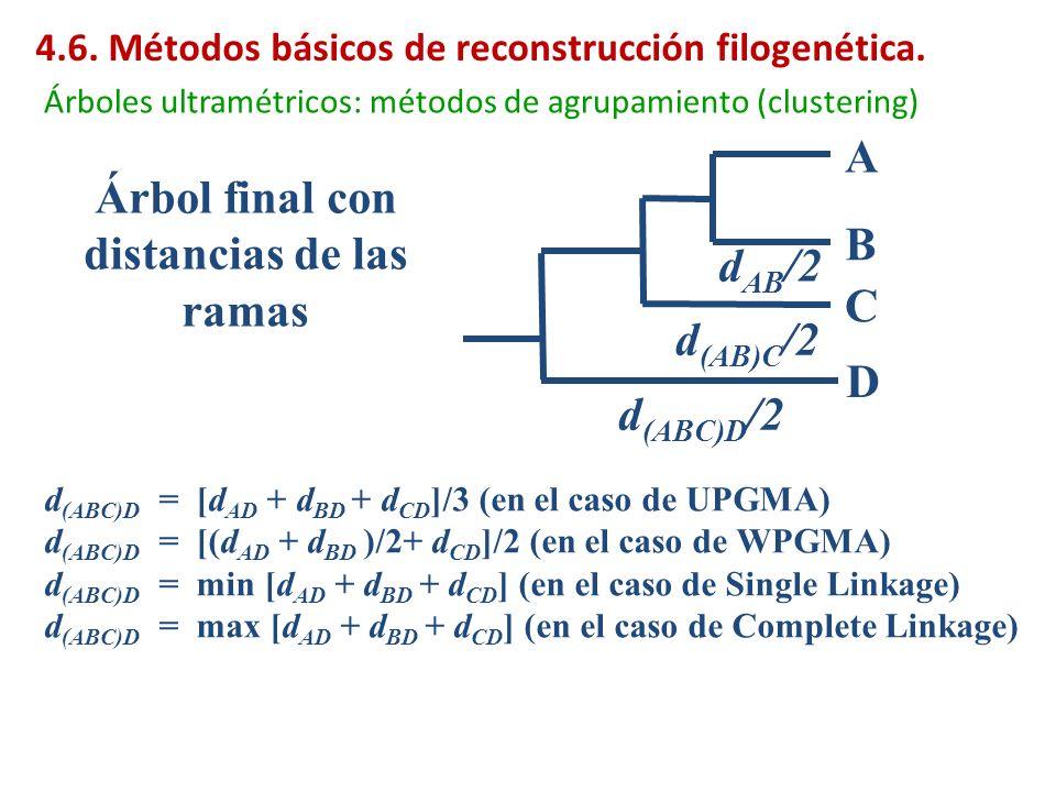 A B C D d (AB)C /2 d (ABC)D /2 Árbol final con distancias de las ramas d (ABC)D = [d AD + d BD + d CD ]/3 (en el caso de UPGMA) d (ABC)D = [(d AD + d
