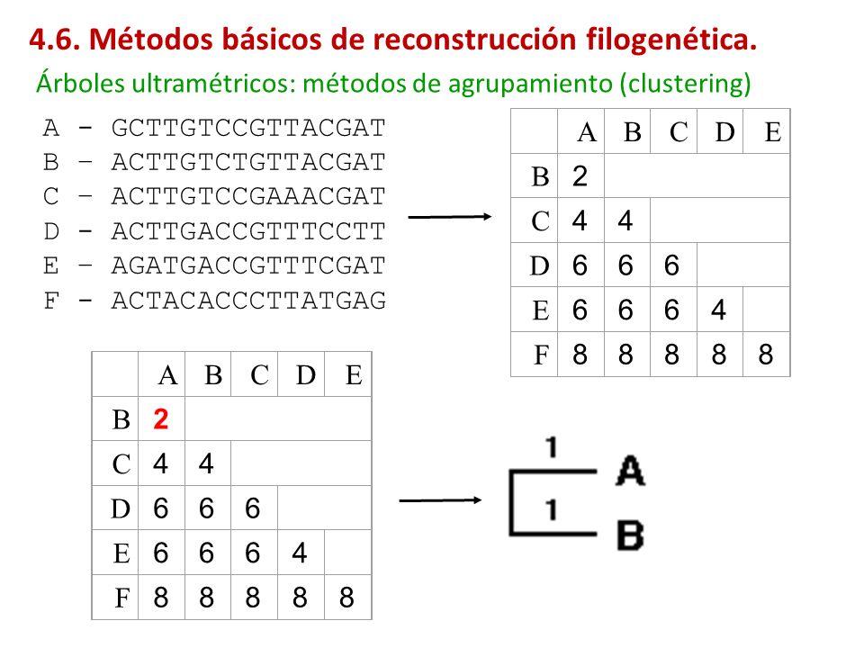 A B C D E B 2 C 4 4 D 6 6 6 E 6 6 6 4 F 8 8 8 8 8 A - GCTTGTCCGTTACGAT B – ACTTGTCTGTTACGAT C – ACTTGTCCGAAACGAT D - ACTTGACCGTTTCCTT E – AGATGACCGTTT