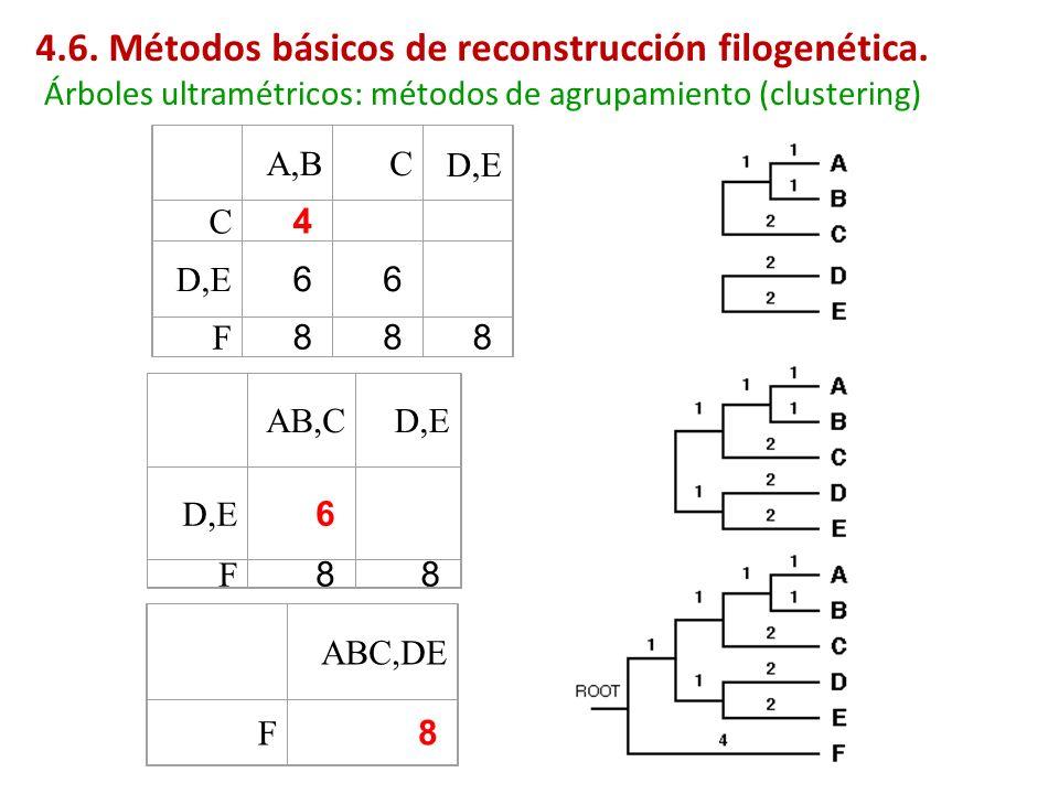 A,B C D,E C 4 6 6 F 8 8 8 AB,C D,E 6 F 8 8 ABC,DE F 8 Árboles ultramétricos: métodos de agrupamiento (clustering) 4.6. Métodos básicos de reconstrucci