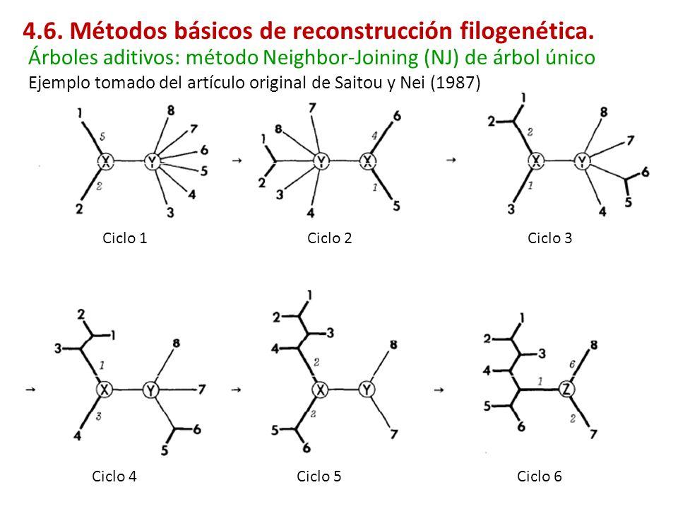 Ejemplo tomado del artículo original de Saitou y Nei (1987) Ciclo 1Ciclo 2Ciclo 3 Ciclo 4Ciclo 5Ciclo 6 Árboles aditivos: método Neighbor-Joining (NJ)