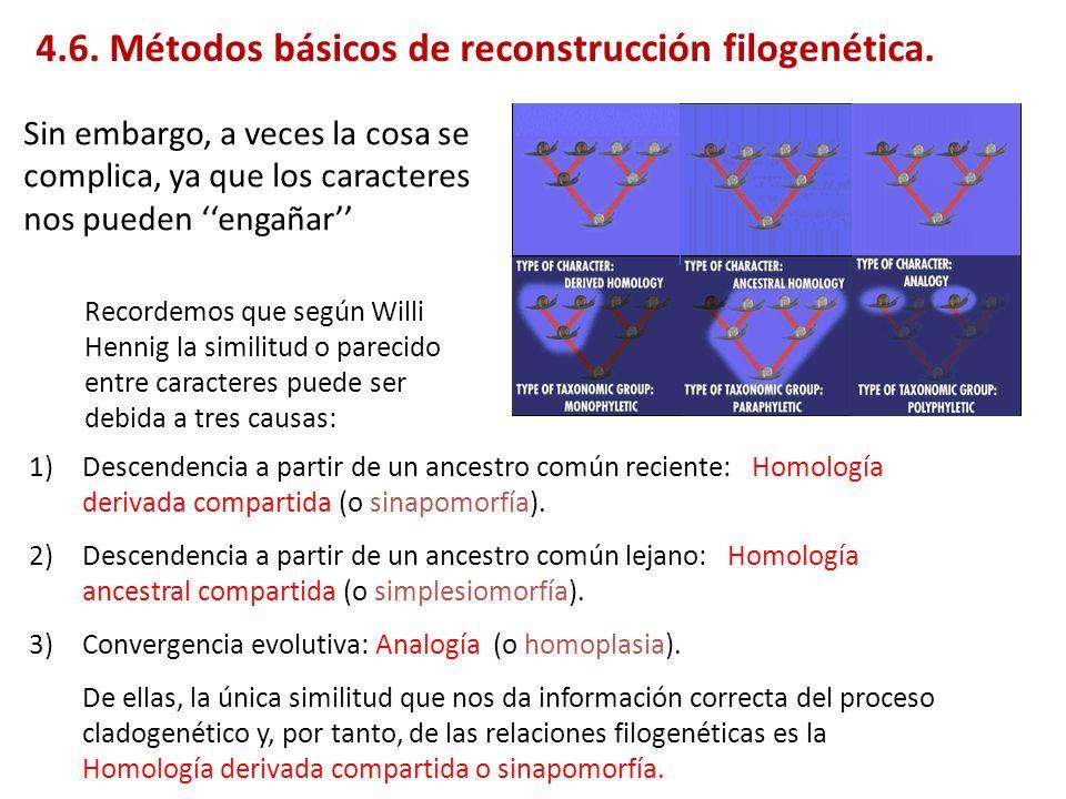 2 ª unión Árboles ultramétricos: métodos de agrupamiento (clustering) (AB) C C d (AB)C D d (AB)D d CD Si min d ij = d (AB)C A B C d (AB)C /2 d (ij)k = (d ik + d jk )/2 para UPGMA y WPGMA d (ij)k = min (d ik, d jk ) para single linkage d (ij)k = max (d ik, d jk ) para complete linkage A la hora de estimar la distancia de un grupo respecto a los demás grupos o taxones (par AB a C en el ejemplo), si las distancias fueran estrictamente ultramétricas d AB y d BC deberían ser iguales, si no lo son es debido a errores estocásticos o homoplasia, por lo que se fuerza a que lo sean y ahí es donde difieren los 4 métodos, el UPGMA toma la media no ponderada de ellas, WPGMA la media ponderada, single linkage la mínima de ellas y complete linkage la máxima.