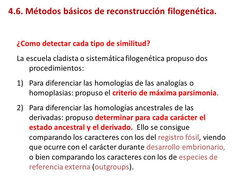 ¿Como detectar cada tipo de similitud? La escuela cladista o sistemática filogenética propuso dos procedimientos: 1)Para diferenciar las homologías de