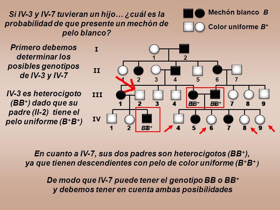 Si IV-3 y IV-7 tuvieran un hijo… ¿cuál es la probabilidad de que presente un mechón de pelo blanco? 1 2 3 4 5 6 7 8 9 1 2 3 4 5 6 7 1 2 1 2 3 4 5 6 7