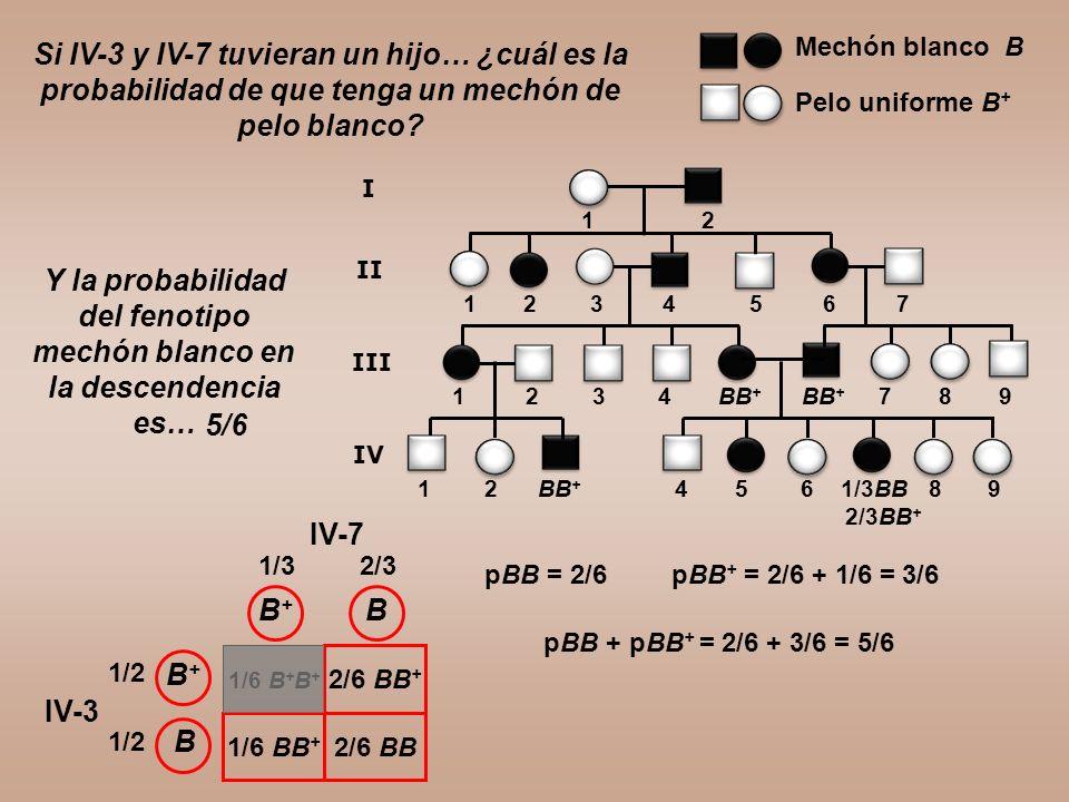1 2 BB + 4 5 6 1/3BB 8 9 2/3BB + 1 2 3 4 BB + BB + 7 8 9 Si IV-3 y IV-7 tuvieran un hijo… ¿cuál es la probabilidad de que tenga un mechón de pelo blan