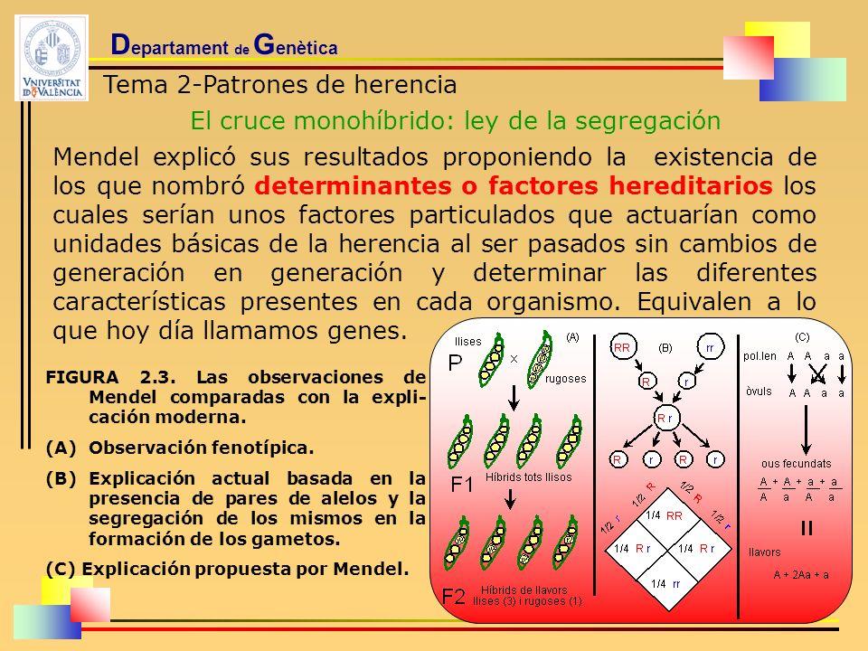 D epartament de G enètica Tema 2-Patrones de herencia El cruce monohíbrido: ley de la segregación Mendel explicó sus resultados proponiendo la existen
