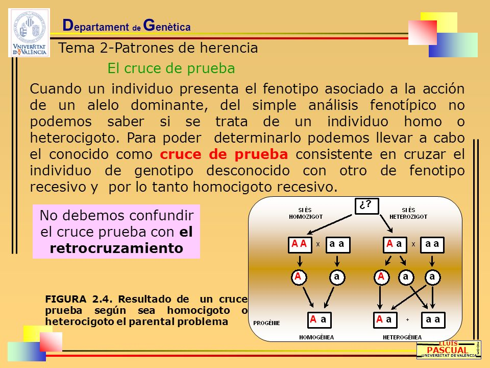 D epartament de G enètica Tema 2-Patrones de herencia El cruce de prueba LLUÍS PASCUAL UNIVERSITAT DE VALÈNCIA 20032003 Cuando un individuo presenta e