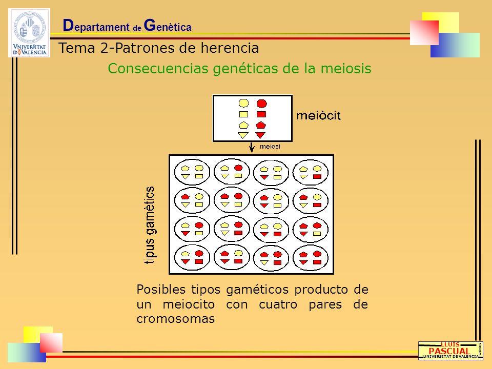 D epartament de G enètica Tema 2-Patrones de herencia Consecuencias genéticas de la meiosis LLUÍS PASCUAL UNIVERSITAT DE VALÈNCIA 20032003 Posibles ti