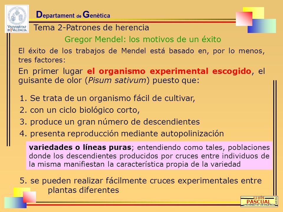 D epartament de G enètica Tema 2-Patrones de herencia Gregor Mendel: los motivos de un éxito LLUÍS PASCUAL UNIVERSITAT DE VALÈNCIA 20032003 1. Se trat