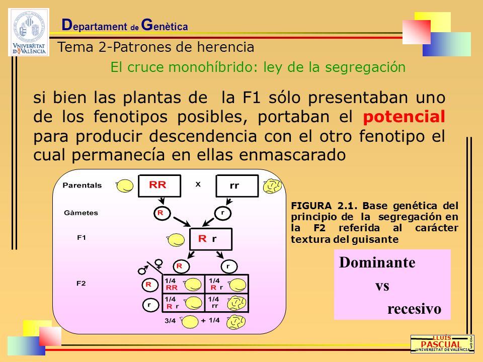 D epartament de G enètica Tema 2-Patrones de herencia El cruce monohíbrido: ley de la segregación LLUÍS PASCUAL UNIVERSITAT DE VALÈNCIA 20032003 si bi