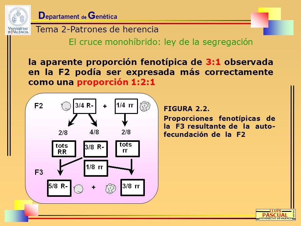 D epartament de G enètica Tema 2-Patrones de herencia El cruce monohíbrido: ley de la segregación LLUÍS PASCUAL UNIVERSITAT DE VALÈNCIA 20032003 la ap