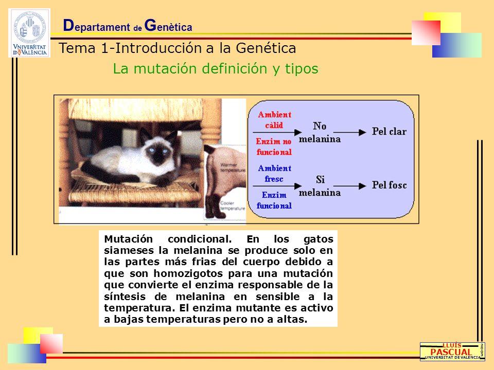 D epartament de G enètica Tema 1-Introducción a la Genética La mutación definición y tipos LLUÍS PASCUAL UNIVERSITAT DE VALÈNCIA 20032003 Mutación con