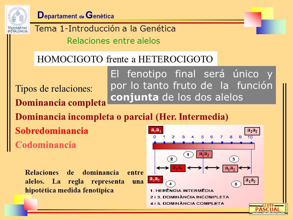 D epartament de G enètica Tema 1-Introducción a la Genética Relaciones entre alelos 20032003 HOMOCIGOTO frente a HETEROCIGOTO El fenotipo final será ú