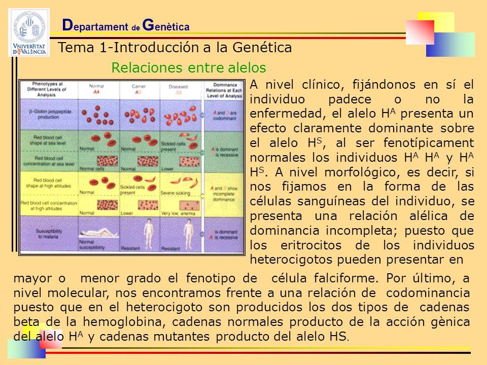 D epartament de G enètica Tema 1-Introducción a la Genética Relaciones entre alelos A nivel clínico, fijándonos en sí el individuo padece o no la enfe