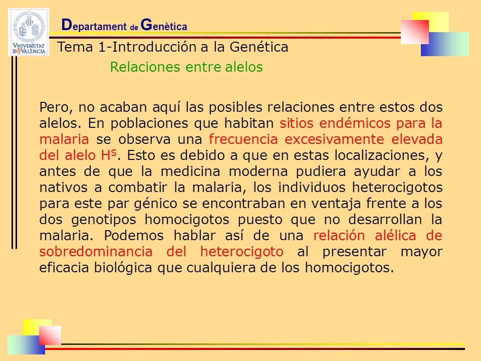 D epartament de G enètica Tema 1-Introducción a la Genética Relaciones entre alelos Pero, no acaban aquí las posibles relaciones entre estos dos alelo