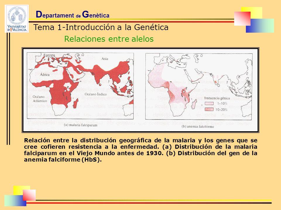 D epartament de G enètica Tema 1-Introducción a la Genética Relaciones entre alelos Relación entre la distribución geográfica de la malaria y los gene