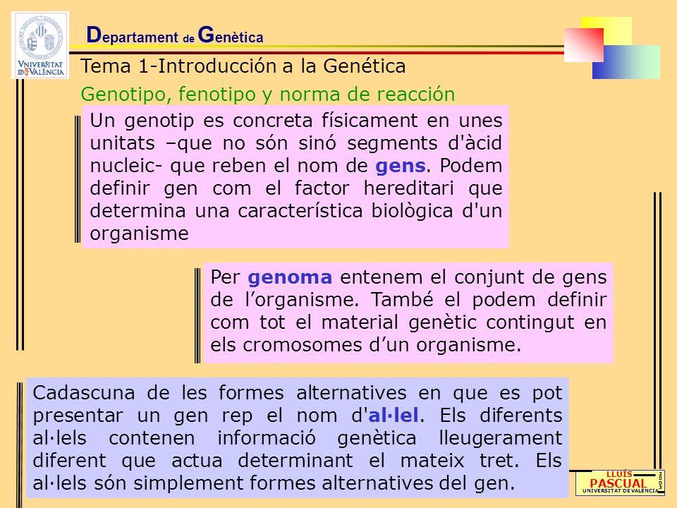 D epartament de G enètica Tema 1-Introducción a la Genética Genotipo, fenotipo y norma de reacción LLUÍS PASCUAL UNIVERSITAT DE VALÈNCIA 20032003 Todo fenotipo es consecuencia de la acción de determinado genotipo en un ambiente concreto y tanto un cambio del genotipo como un cambio ambiental pueden afectar drásticamente al fenotipo final La norma de reacción del genotipo nos indica la manera en que cambia el fenotipo según el medio donde se encuentra y, por lo tanto, el papel que juega el ambiente Un genotipo determinado responderá de manera constante para cada posible ambiente donde se desarrolle su acción dando lugar a un fenotipo concreto asociado a estos genotipo y ambiente FENOTIPO = GENOTIPO + AMBIENTE