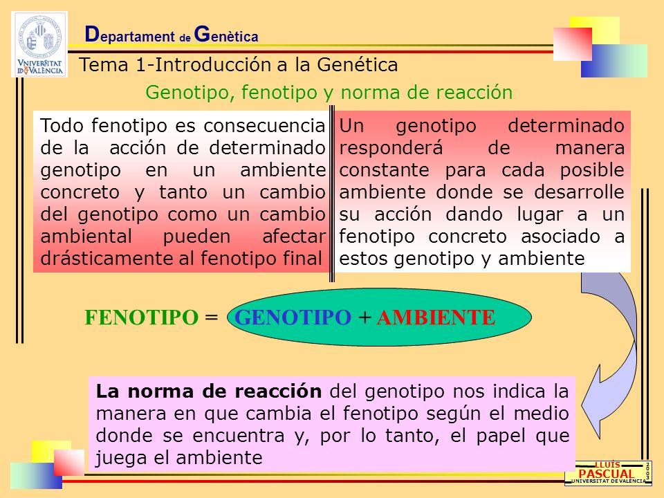 D epartament de G enètica Tema 1-Introducción a la Genética Genotipo, fenotipo y norma de reacción LLUÍS PASCUAL UNIVERSITAT DE VALÈNCIA 20032003 Todo