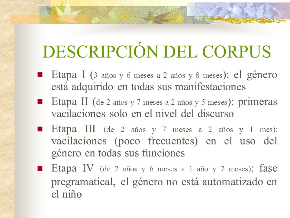 DESCRIPCIÓN DEL CORPUS Etapa I ( 3 años y 6 meses a 2 años y 8 meses ): el género está adquirido en todas sus manifestaciones Etapa II ( de 2 años y 7