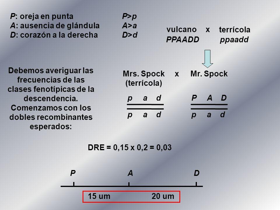 P: oreja en puntaP>p A: ausencia de glándulaA>a D: corazón a la derechaD>d vulcano terrícola x Mr. Spock Mrs. Spock (terrícola) x p a d P A D p a d P