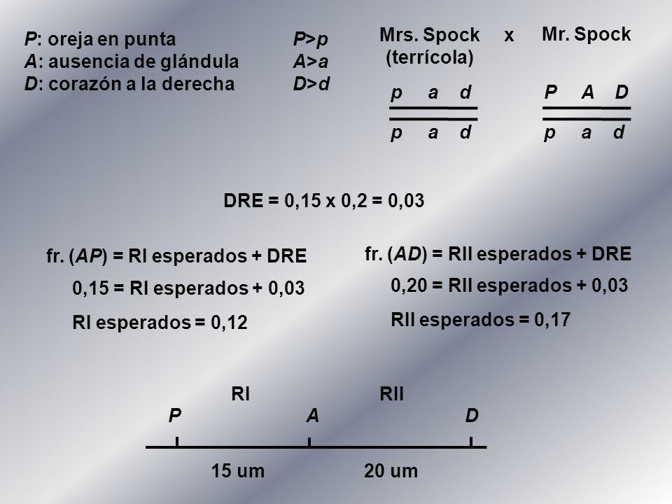 P: oreja en puntaP>p A: ausencia de glándulaA>a D: corazón a la derechaD>d P 15 um20 um AD DRE = 0,15 x 0,2 = 0,03 fr. (AP) = RI esperados + DRE 0,15