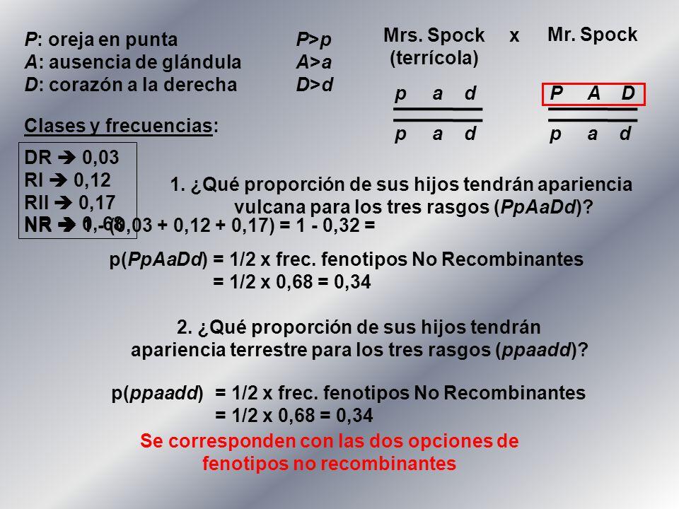 P: oreja en puntaP>p A: ausencia de glándulaA>a D: corazón a la derechaD>d Mr.